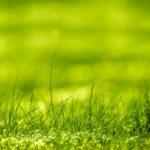 【ウィンブルドン名物】芝を食べるジョコビッチ