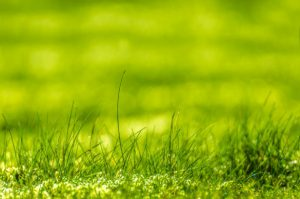 green-grass-13894556519ha
